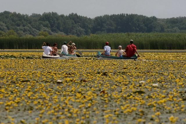 Lake Tisza veiled with flowers