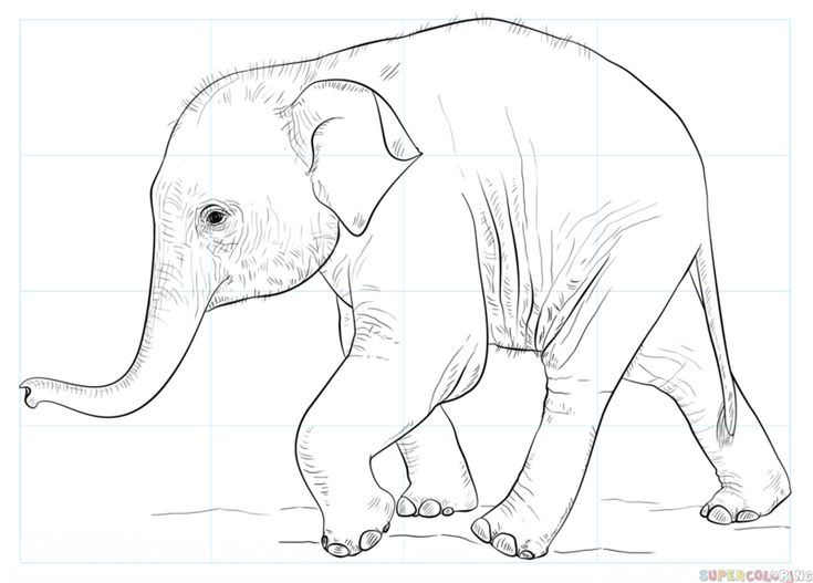 how to draw a baby elephant step by step drawing tutorials for kids and beginners