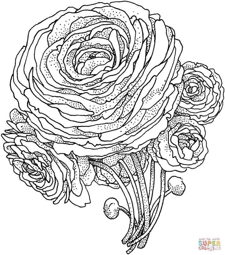 peony flower coloring page from peony category select from 24652 printable crafts of cartoons nature animals bible and many more