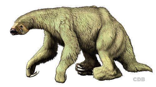 Eremotherium | Giant Ground Sloth | Eremotherium.jpg: