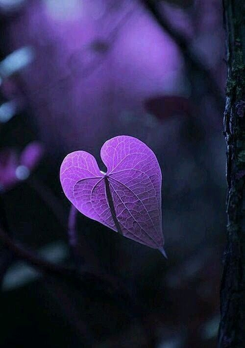 That's how we feel about Purple too! <3