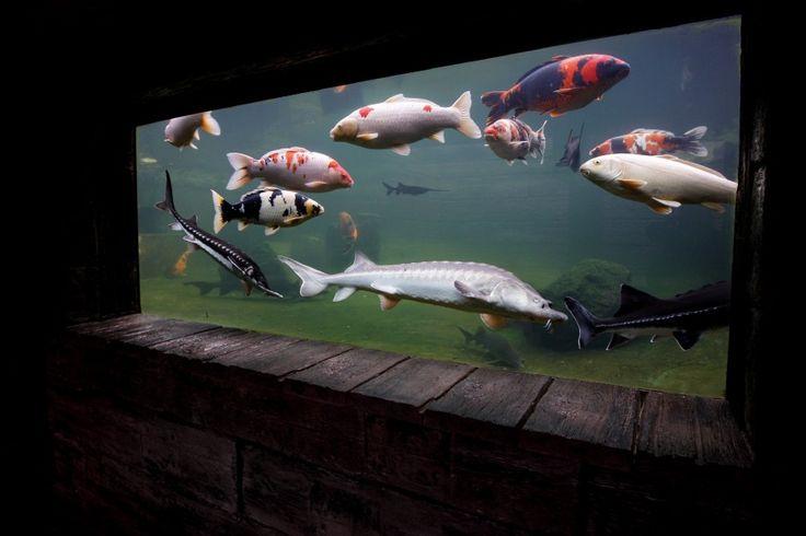 Podzemní akvárium - Jezírka Banat