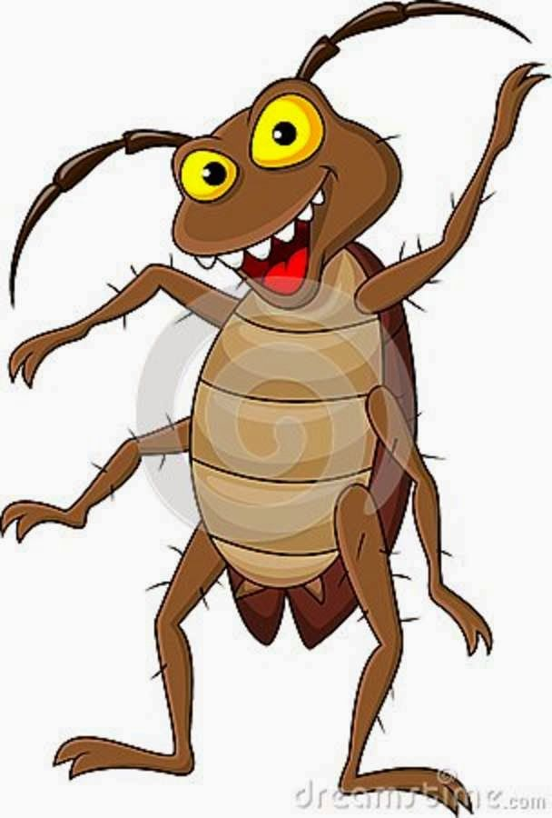 You Can Rely On Pest Control Company In Eliminating All The Bugs And Also  All Kinds
