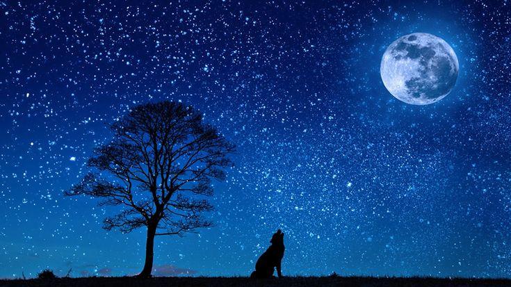 Lo Zen della Luna, in una notte. Lo Zen con due lupi e sei strani figuri. Lo zen e una donzella che scala una impervia montagna...
