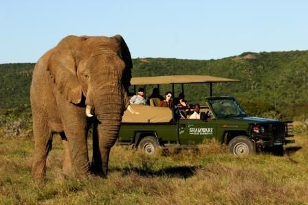 Shawarmi Game Reserve, South Africa - One day!