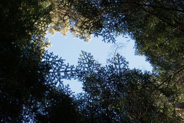 Paulina Kozak fotografia: forest