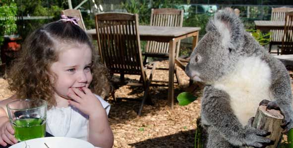 breakfast with KoalasMetro Apartments, Darling Harbour, Buckets Lists, Sydney Tourism, Koalas Breakfast, Sydney Darling, Lust Lists, Tourism News, Lotta Money