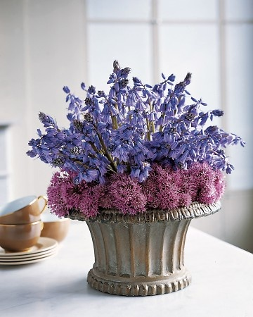 (Purple Pairings: Spanish Bluebells & Blossoming Chive)  Mingle dainty Spanish bluebells with fluffy chive blossoms for a textured centerpiece.