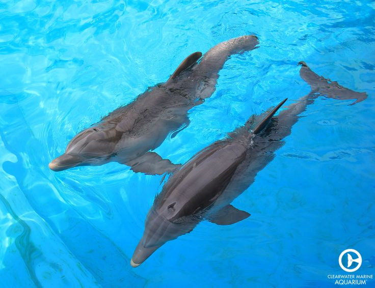Meet Winter the dolphin and Hope the dolphin, the new stars of Dolphin Tale 2!