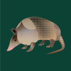 Cachicamo. Ilustración vectorial hecha en illustrator