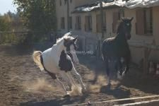 Workaway in Turkey. Stay in Turkey and help out with our horses