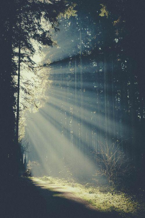 iPhone 5 Wallpaper - Forest Light