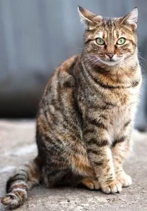 Warrior Cats Sorrelpelt