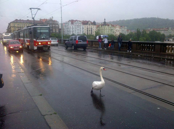 Prague this week, floods
