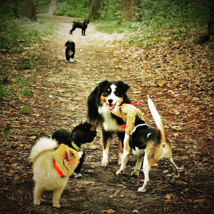 #martha #friend #dog #dogwalk #holiday #happydog #australianshepherd #havanesedog #beagle #frenchbulldog #spitz #little #cocker #fun #forest #love #energiearevendre #jachete! #�� #commechienetchat http://misstagram.com/ipost/1572044640693454270/?code=BXRBkWLlwW-