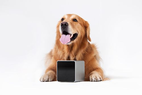 The Petcube houses a wide-angle camera capable of streaming HD video, a vet-approved low-intensity laser pointer on a movable platform, and a microphone and speakers