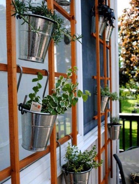Как вырастить пряные травы на балконе или подоконнике.