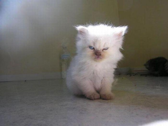 """Gatos que estão de """"saco cheio"""" das brincadeiras e piadas dos seus donos   Tá Bonito"""