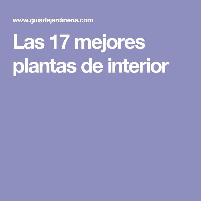 Las 17 mejores plantas de interior