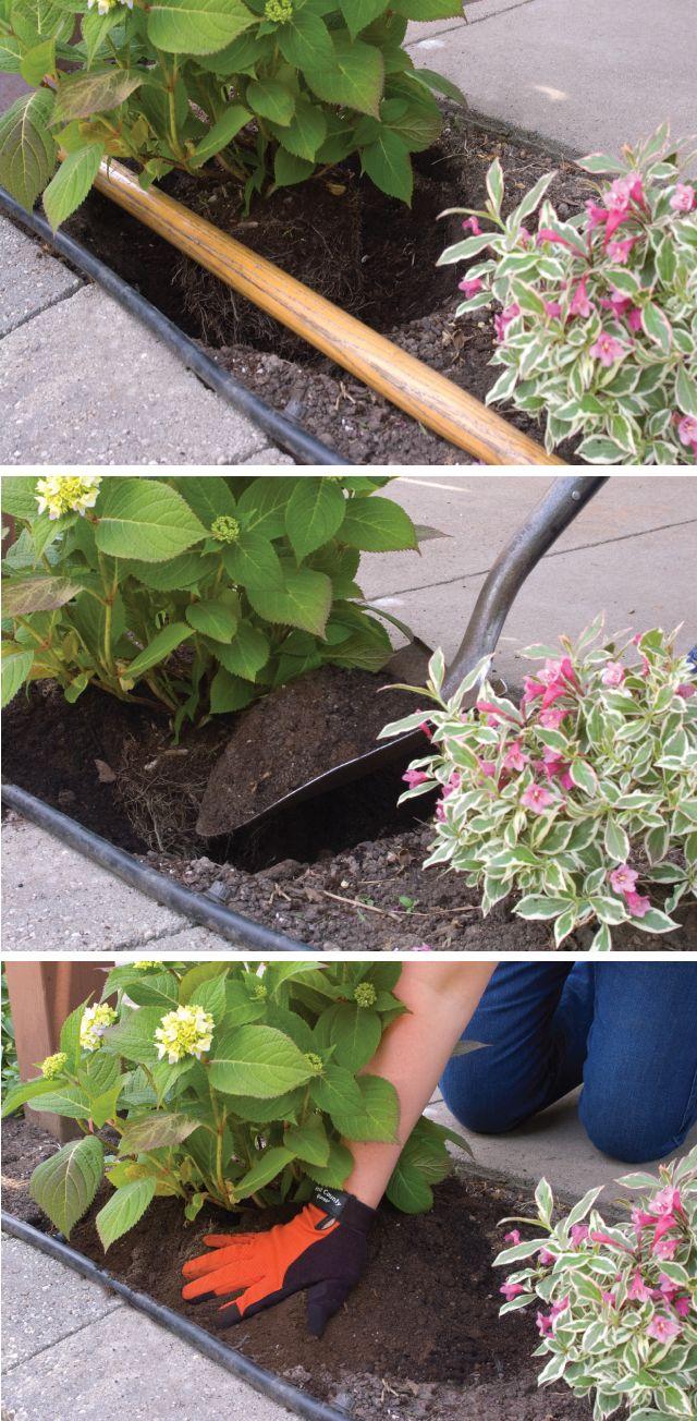25 best care of hydrangeas ideas on pinterest hydrangeas hydrangea and hydrangea garden - Caring hydrangea garden ...