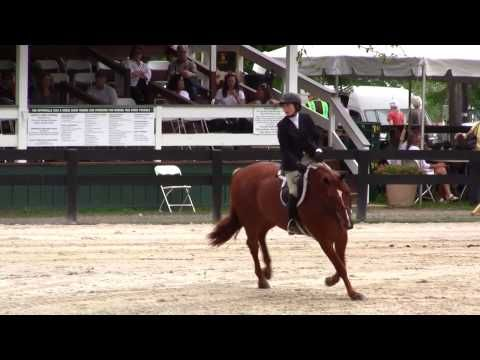 Tori Colvin Shows Us What A 100 Hunter Score Looks Like | The Chronicle of the Horse