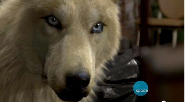 Elena's wolf ~ Bitten