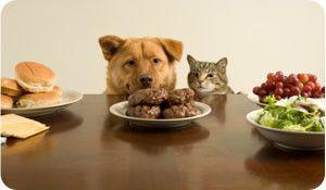 Pet Nutrition - Pet Quest