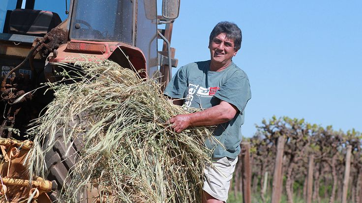 Steve Asimopoulos felt he had won the lottery when the Government paid him to walk off his Barmera fruit block to free up water for environmental flows during the drought. The cash payout brought relief from the crippling debts he had incurred modernising his wine grape block in the 1990s. He had increased plantings, switched to drip irrigation and upgraded his machinery to tap into the prosperity of the wine grape boom in the Riverland, an irrigated fruit bowl on the River Murray in South…