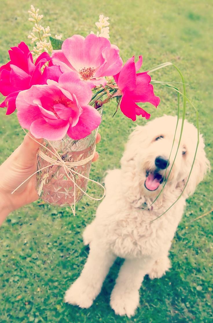 67 best dog days of summer images on pinterest dog day beach