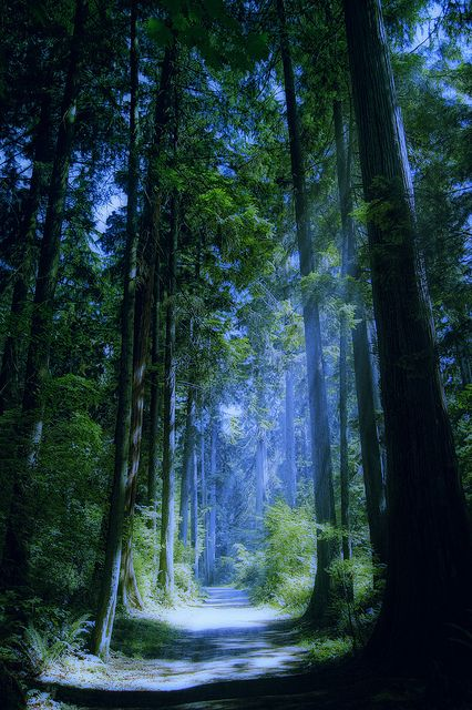 Blue Forest, Vancouver, Britsh Columbia, Canada: Enchanted Forest, Forests, Tree, Nature, Beautiful, Vancouver Canada, Vancouver British Columbia, Places