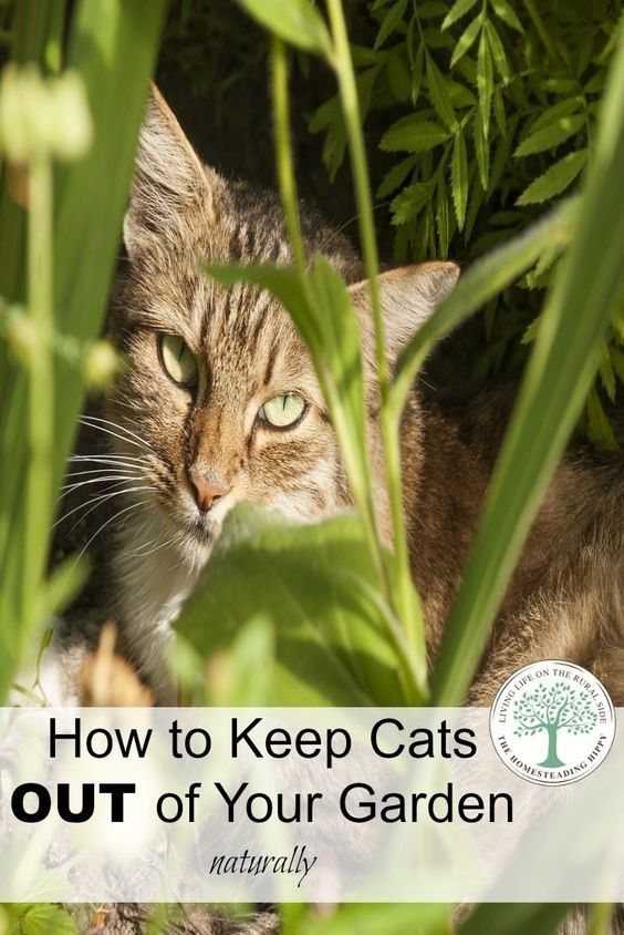 Cheap Ways To Keep Cats Out Of Garden