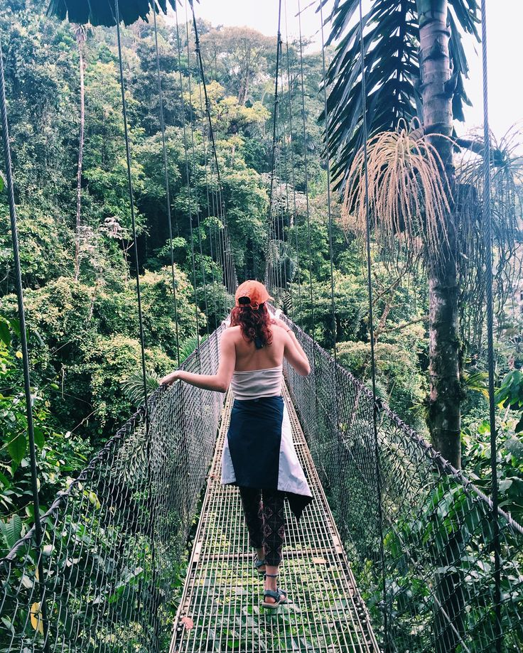 hanging bridges in the cloud forest