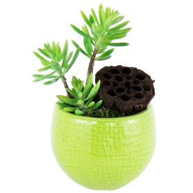 Succulents Desk Top Plant in Round Ceramic Pot