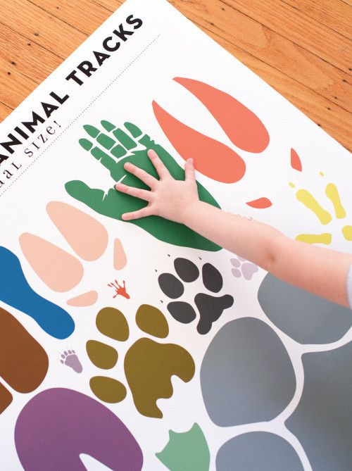 Pop Chart Lab --> Design + Data = Delight --> An Array of Animal Tracks: Actual Size!