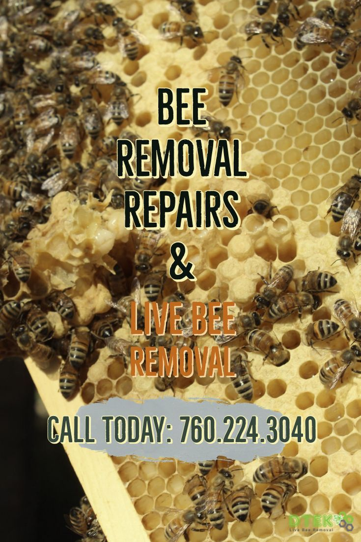 Do You Live In Rancho Bernardo And Have A Bee Swarm Look No Further Than D Tek Live Bee Removal For All Your Bee Control Needs Bee Removal How To Remove