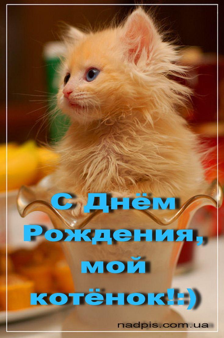 Фразы, картинка с надписью мой котенок