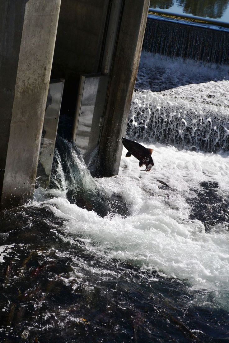 17 images about scenic bureau of reclamation on for Coleman fish hatchery