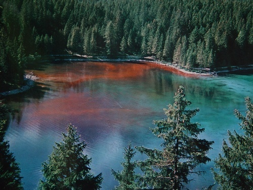 Lago di Tovel 1963...quando diventava rosso !