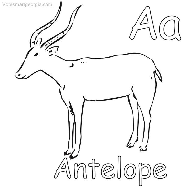 Antelope Printable Coloring Pages Antelope Coloring Pages