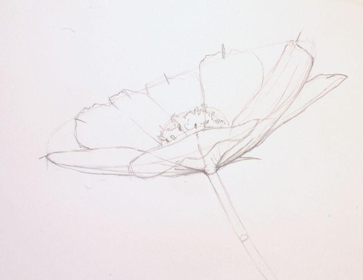 Lekcja rysunku #1 - jak narysowac kwiaty - Kanciapa