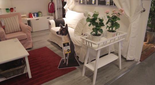 Adopteer een hond in Ikea. http://www.adformatie.nl/artikel/adopteer-een-hond-ikea