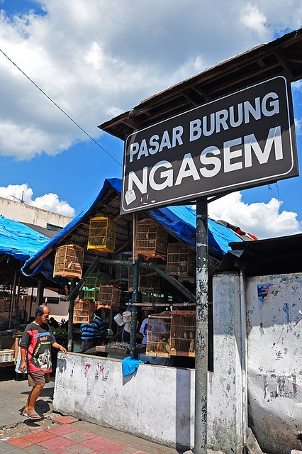Pasar Ngasem ( Bird Market) #PINdonesia