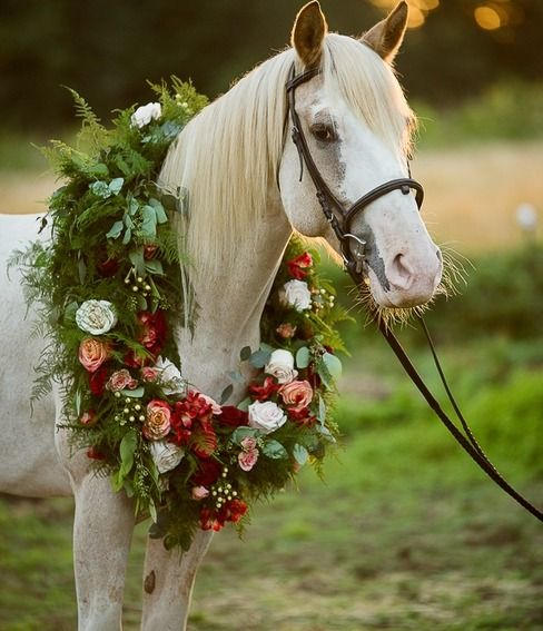 лошади в картинках розы также отсутствием