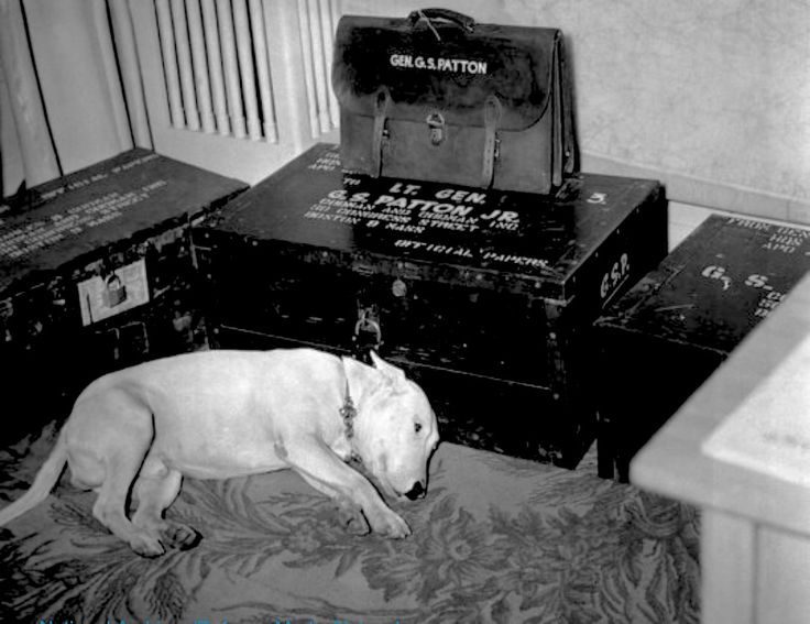 The following photo shows Willie lying next to Patton's belongings a few days after the general's death. Patton was buried at the American Cemetery in Hamm, Luxembourg. Willie was sent to the US to live with Patton's wife and daughters. http://www.businessinsider.com/general-pattons-dog-day-of-pattons-death-2015-12