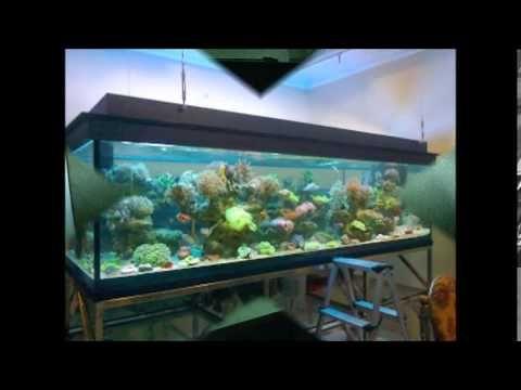 Desain Aquarium Air Tawar Paling Keren https://www.youtube.com/watch?v=XkpXcvaEIDM