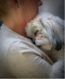 Shih Tzu Information  Things You Need To Know About Your Shih Tzu