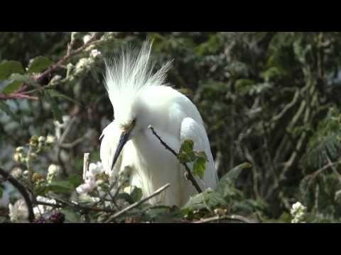 Must-see in California. Alcatraz Island. Birds. Птицы Алькатраса. Калифо...