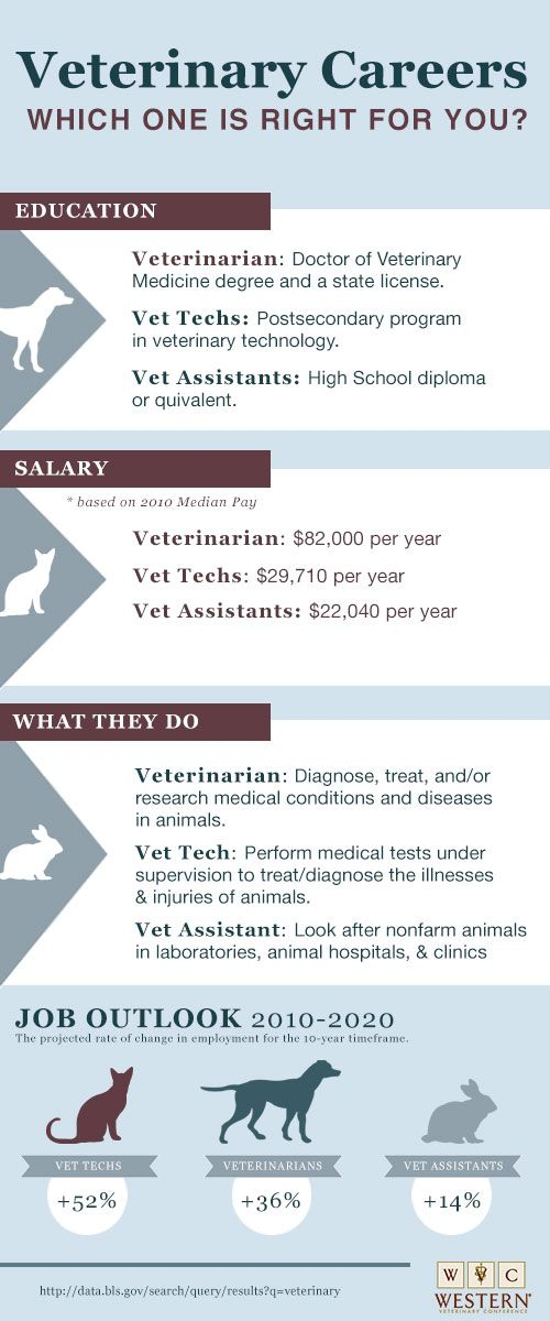 Best 25+ Veterinary Assistant Jobs Ideas On Pinterest | Veterinary
