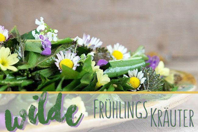 Mein wilder Frühlingssalat – Rezept für einen Wildkräutersalat