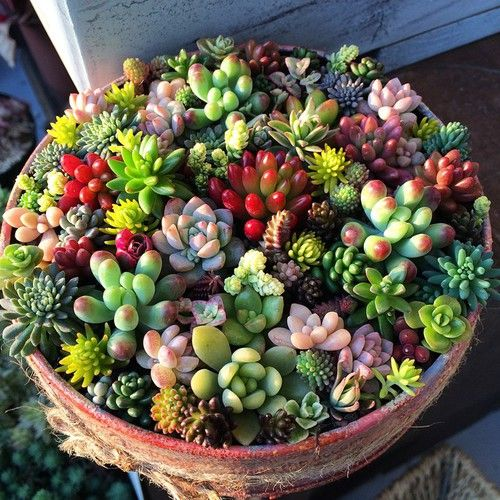 Colorful succulent arrangement